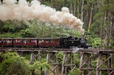 Melbourne Combo: Great Ocean Road plus Healesville Sanctuary and Puffing Billy and Melbourne Attraction Pass Take in the best bits of Melbourne and Victoria with this great-value super saver deal, combining three best selling tours into one money-saving package. First up is a classic one day road trip along the famous Great Ocean Road, followed by a one day trip to Healesville Sanctuary, Dandenong Ranges and Puffing Billy. Finally, enjoy entrance to the Melbourne Aquarium and ...