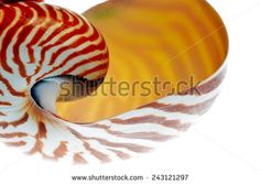 Shells Isolated Stock Photos, Images, & Pictures   Shutterstock