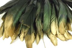 """50 Black Gold Tip Iridescent Rooster Coque Tail Feather 6""""L 8""""L 