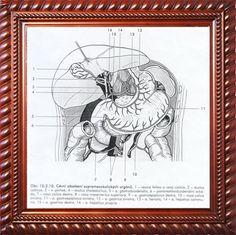 RZEznicek's uploaded images 5th Dimension, Upload Image, Trending Memes, Funny Jokes, Horror, Magic, Art, Art Background, Husky Jokes