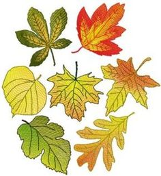 Advanced Embroidery Designs - Autumn Leaves
