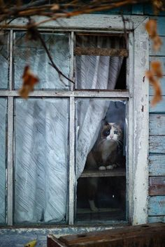 Old Window...look who is peeking out.....