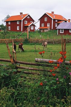 The Swedish countryside is part of a fairytale!