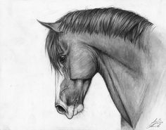 Horse...Drawing by Cobertizo on DeviantArt