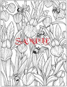Sensational Succulents An Adult Coloring Book Of Amazing Shapes And
