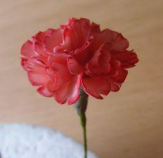 How to make a Gumpaste Flowerpaste Carnation (New Version including Audio)