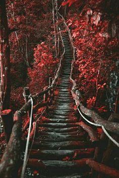 Imagine autumn, landscape, and beautiful