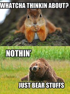 bear stuffs