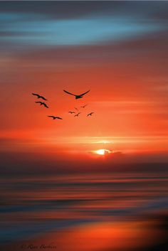 A flock of birds against a beautiful sunset. Sunset Wallpaper, Nature Wallpaper, Sunset Photography, Landscape Photography, Nature Pictures, Beautiful Pictures, Amazing Sunsets, Sky Aesthetic, Beautiful Sunrise