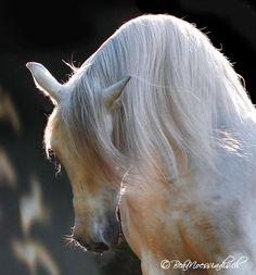 Very Beautiful Horse