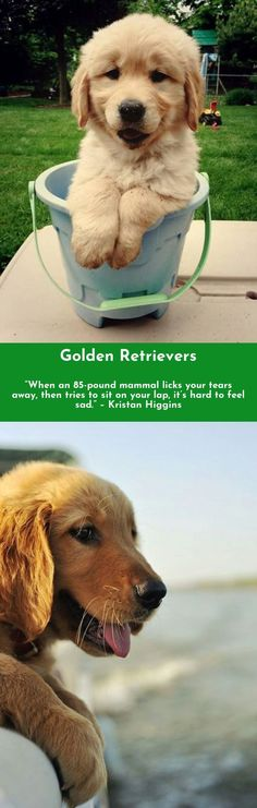 The more boys I meet, the more I love my dog.—Carrie Underwood #goldenretrievers