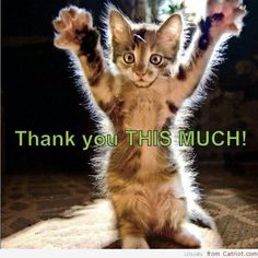 Image result for thank you for feral cat food