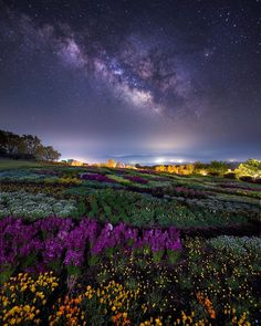 """Astrailor(アストレーラー) on Instagram: """". 🌌天に星、地に花、人に愛 💠 Stars for the sky, flowers for our ground, love for people 🌐くじゅう花公園 大分県 🌏Kuju Flower Park Oita, Japan I want to hold a…"""" Northern Lights, Mountains, Nature, Travel, Animals, Instagram, Naturaleza, Viajes, Animales"""