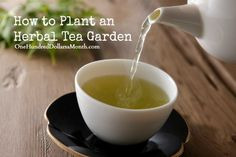 How to Plant an Herbal Tea Garden I would add sage, lemon grass, lemon verbena and to be sure to select three types of mint (spearmint, chocolate mint and orange mint are good ones) Bee balm (Monarda) may be what she is referring to as Bergamot and is a wonderful plant for hummingbirds.