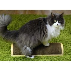 PRODUCTS :: FOR BREEDERS :: For cats :: Refillable universal scratcher