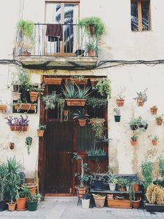 Plants #barcelona #spain | Adam Andersson | VSCO Grid