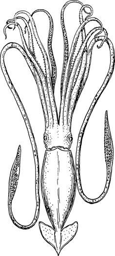 squid gullscoloring pagescolouringcrackdeep