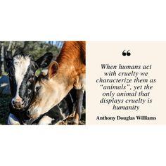 "173 Likes, 3 Comments - Animal Place (@_animalplace) on Instagram: ""Photo by @marjib #anthonydouglaswilliams #animalplace #sanctuary #rescue #compassion #kindness…"""