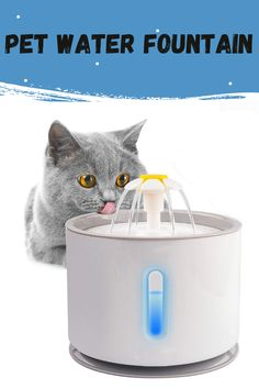Pets struggle with sufficient levels of hydration, too. This product will fix the issue of drinking water well for pets and you don't have to think about not preparing drinking water for pets while you're busy with the job. This creative fountain inspires your pet to drink more water, with a fun concept keeping her safe and hydrated. Outdoor works also encourage pets to enjoy the sun. #petwaterfountain #catwaterfountain #bestpetsafewaterfountains #catwaterfountainstainlesssteel Cat Water Fountain, Drink More Water, Water Well, Enjoying The Sun, Pet Safe, Drinking Water, Encouragement, Concept, Pets