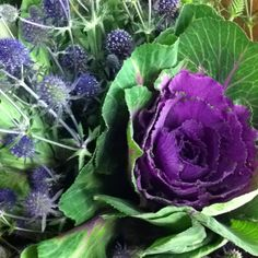 Love the cabbage like flower. Cabbage Flowers, Vegetables, Alaska, Florals, Floral, Flowers, Vegetable Recipes, Veggies