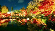 """紅葉の名所は数あれど、京都・永観堂(禅林寺)は名実ともにトップクラス。その美しさは、『古今集』で「もみじの永観堂」と詠まれているほどです。見頃を迎えている現在は、夜の""""特別拝観""""を実施中。今年もまた、幻想的な光景を一目見ようと、多くの人が殺到している模様!"""