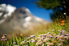 Un jardin dort sous la neigeA 2 050 m d'altitude, le jardin alpin du Lautaret (Hautes-Alpes) est l'un des plus hauts observatoires botaniques de la planète. C'est aussi l'un des plus beaux.