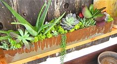 Patinated Steel Planter filled with Succulents