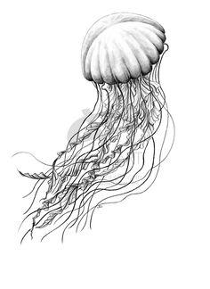 SeaNettle by MissNysha.deviantart.com on @deviantART #jellyfish