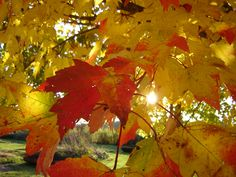 #Autumn #Fall #Leaves #Wow #Photo #Sunlight