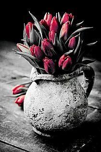 splash of color Flower Wall, Flower Vases, Flower Arrangements, Love Flowers, Spring Flowers, Beautiful Flowers, Deco Floral, Arte Floral, Splash Photography