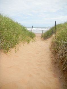 Beach path, Cavendish PEI. One of very favourite places in the world. 10/10 WOULD HIGHLY RECOMMEND