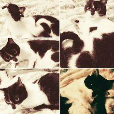 ちょっと目を離すと 最近当たり前のように侵入。 そしてベッドかて。  #愛猫#猫#cat#猫部#ニーナ#ババ猫#13歳  しかし‥‥可愛い♡