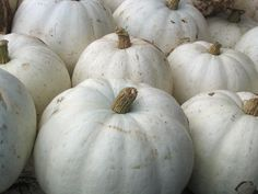 My fall favourite: the white pumpkin.