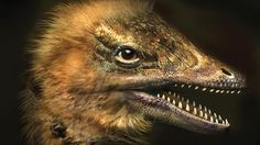 ...developed by scientists http://www.bbc.com/earth/story/20150512-bird-grows-face-of-dinosaur