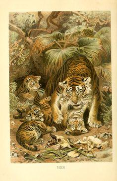 Brehms Tierleben; allgemeine kunde des thierreichs, Vol I. Third revised edition, 1893-1900.