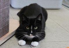 Lebhafte und freundliche Katzendame sucht ein neues Zuhause!  - WG Zimmer in Berlin-egal gesucht - WG-Gesucht.de