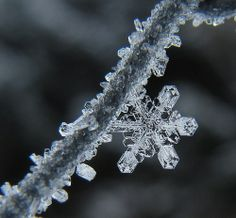 I love how this tiny snowflake is hugging a crystallized frozen branch.