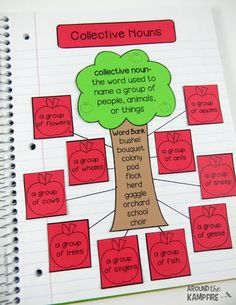 Apple activities-Collective Nouns interactive notebook for 2nd and 3rd grade.
