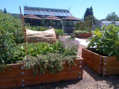 The culinary garden