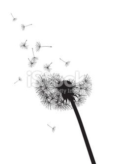 black and white dandelion with flying seeds Royalty Free Stock Vector Art Illustration
