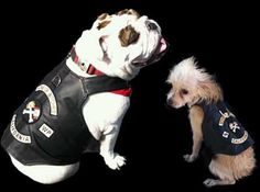 Authentic leather biker vests and gear for your pet.