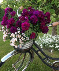 flowers in bike basket Garden Art, Flower Arrangements, Flower Garden, Plants, Bike Planter, Beautiful Flowers, Flower Planters, Flowers, Container Gardening