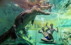"""Underwater trip to Australia's """"Cage of Death"""" : Submerged within a completely transparent tube"""