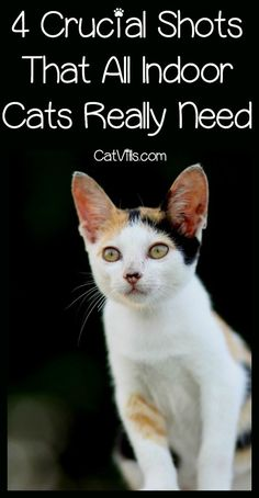 Cat Care Remedies Which shots do your indoor cats really need? While it varies depending on your area, these four are at the top of every vet's recommendation list! Check them out! I Love Cats, Cool Cats, Gatos Cool, Cat Info, Kitten Care, Cat Behavior, Cat Facts, Cat Health, Health Tips
