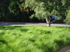 Lawn alternatives...different grasses, groundcovers to use instead of your lawn