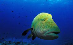 Radley Bishop - fish picture - 1920x1200 px