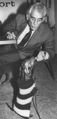Leonard Bernstein gives his dog Henry a piece of cheese during a press conference at Logan International Airport in Boston on November 25, 1981