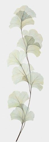 Image result for gingko silhouette