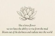 #lotus #rise #meditation #mindfulness via @easymeditationclub