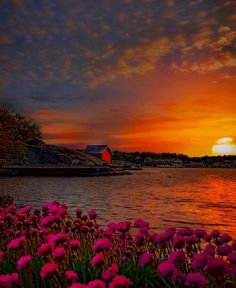 Norway, The Selection, Sunrise, Butterfly, Nature, Artist, Outdoor, Painting, Beautiful